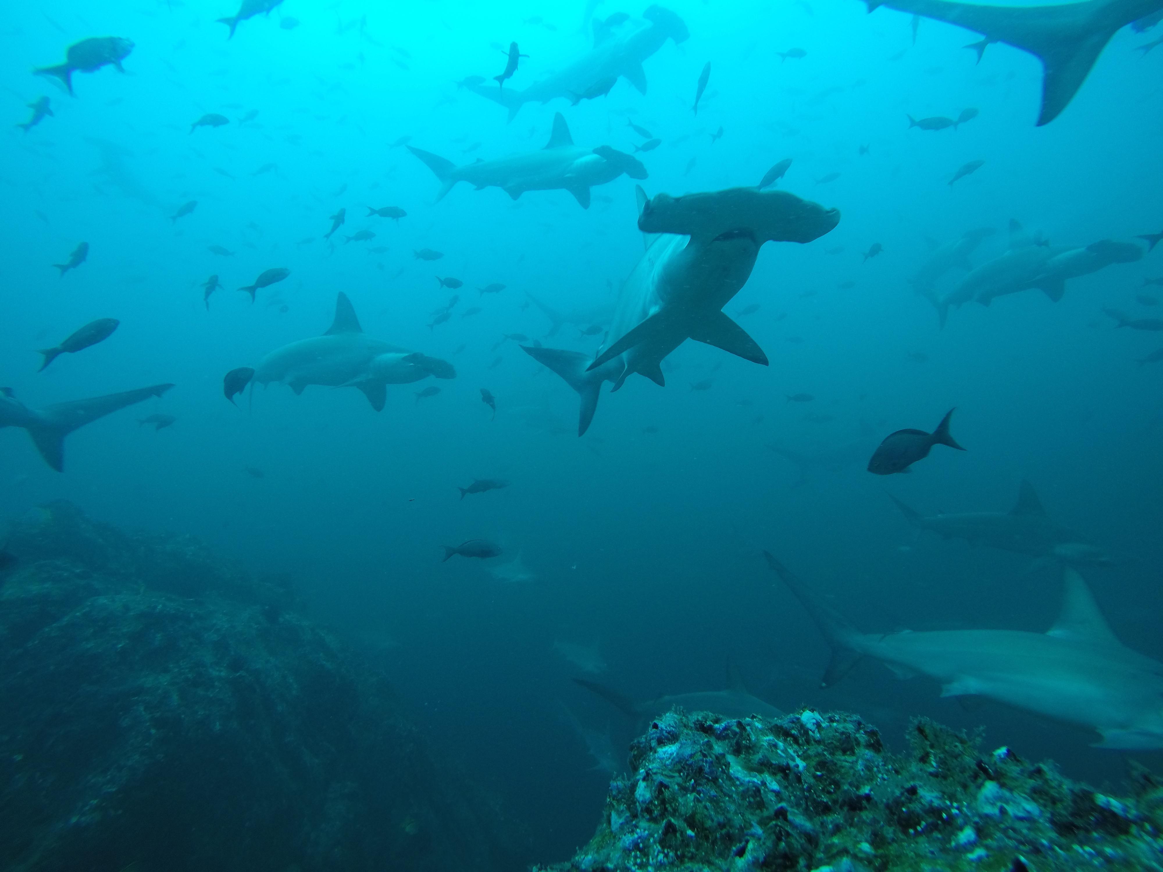 tirn sharks!.jpg